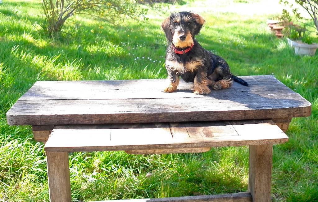 Table rustique en chêne | Puces Privées