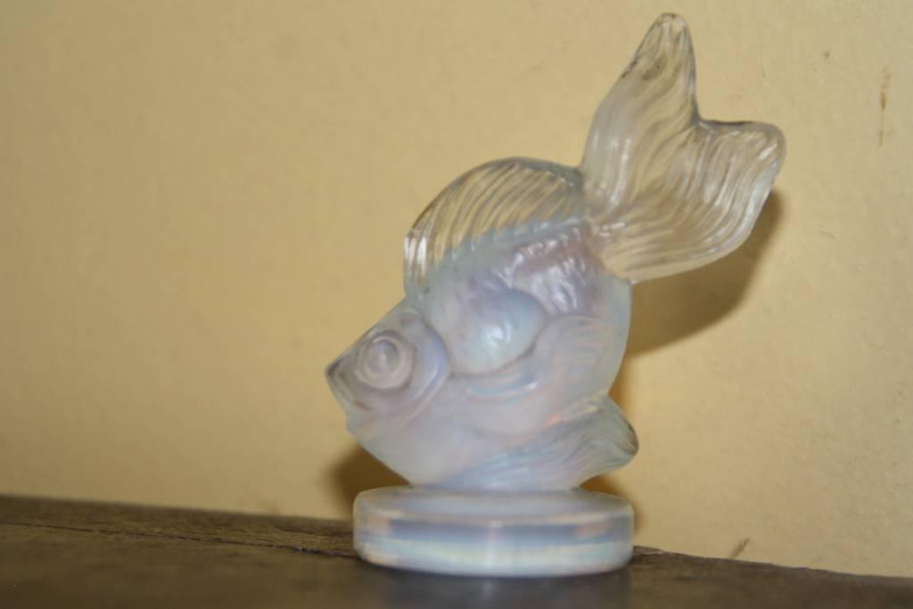 poisson opalescent Sabino | Puces Privées