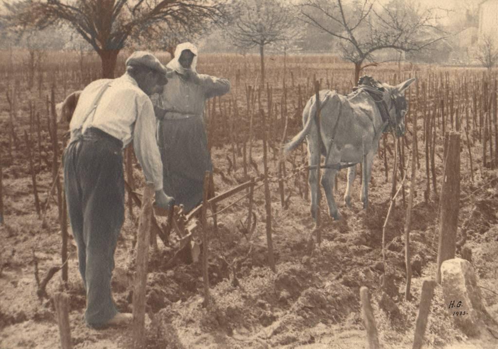 Photographie vendanges de Bourgogne 1933  Labour des vignes | Puces Privées